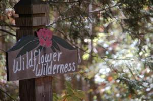 wildflower mountain cabin rentals